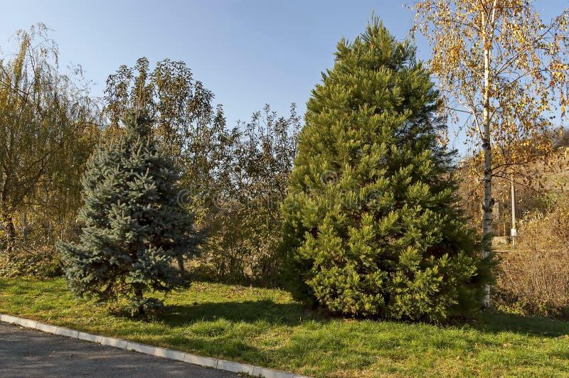 Herfst populair park voor rust met mengelings vergankelijke en naaldboom in centrum van dorp Lokorsko royalty-vrije stock fotografie