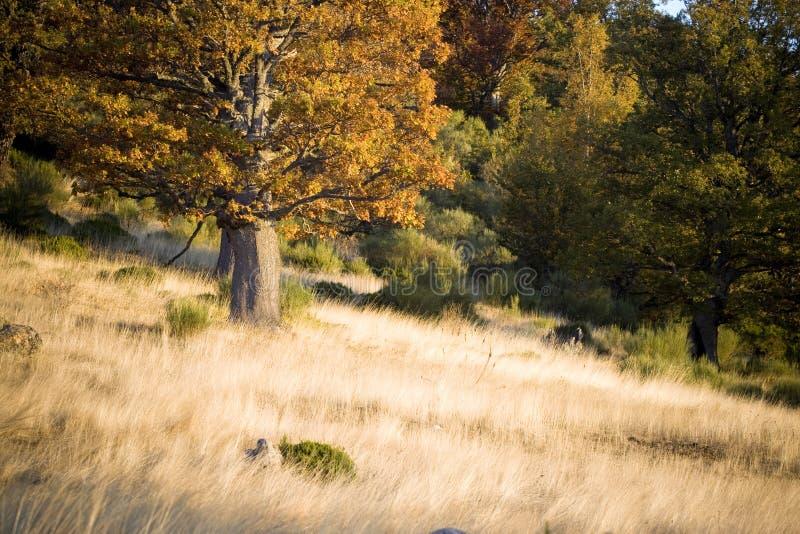 Herfst scène in het bos royalty-vrije stock foto