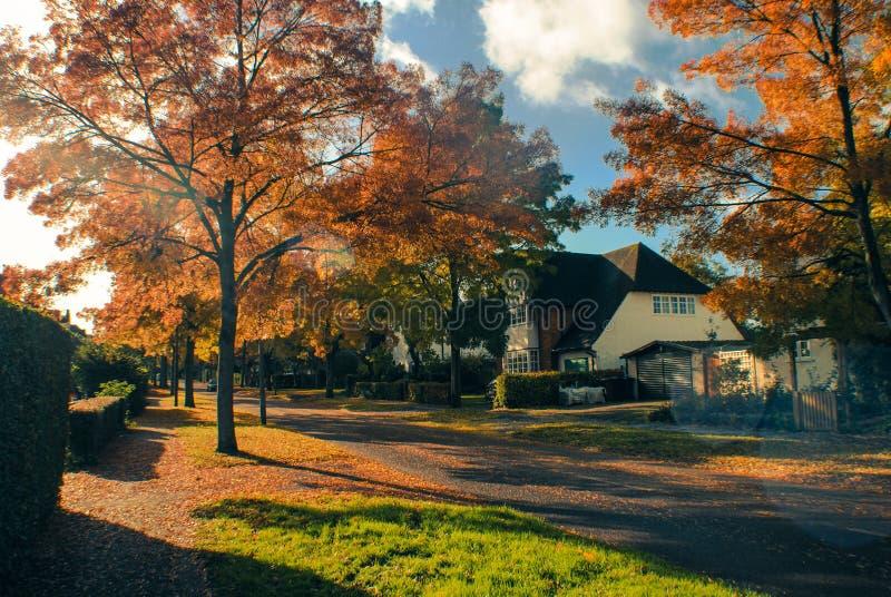 Herfst Straat stock afbeelding