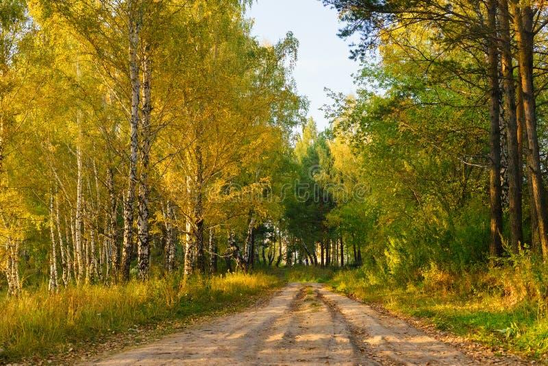 Herfstbos en de weg tussen de bomen stock foto's