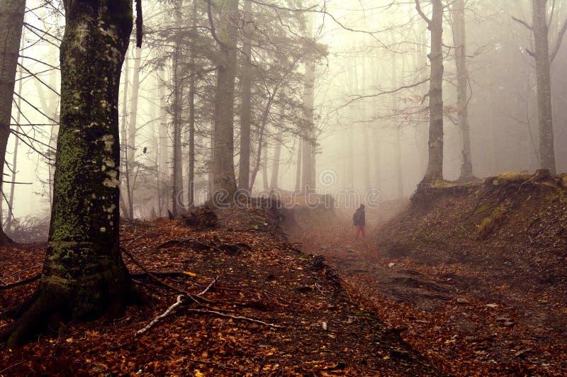 Herfstforest walk royalty-vrije stock fotografie