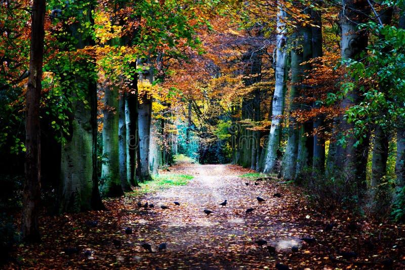 Herfstweg in het bos royalty-vrije stock foto