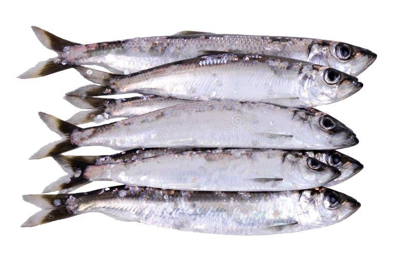 Download Heringfische auf Lager stockbild. Bild von nave, seafood - 27726891