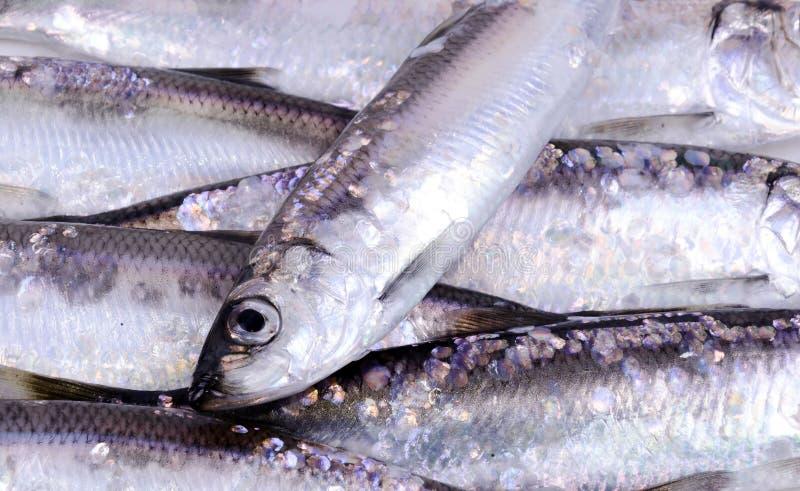 Download Heringfischhintergrund stockbild. Bild von seafood, auge - 27726903