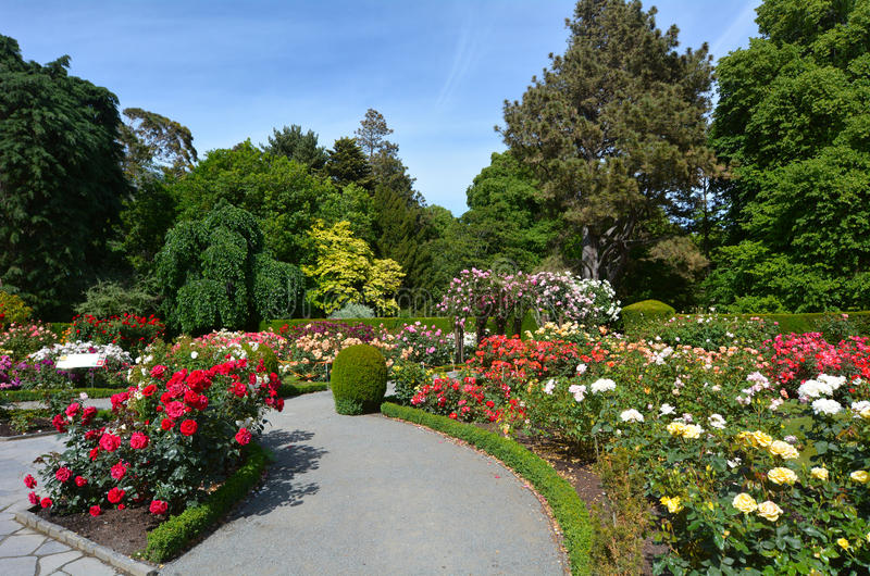 The Heritage Rose Garden in Christchurch Botanic Gardens, New Zealand. CHRISTCHURCH, NZL - DEC 04 2015:The Heritage Rose Garden in Christchurch Botanic Gardens royalty free stock image