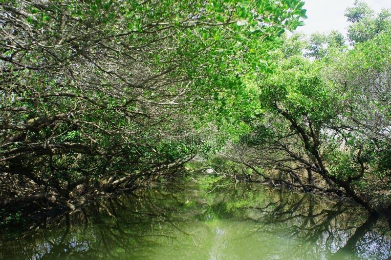 Download Heritage wetland stock image. Image of green, history - 25060039