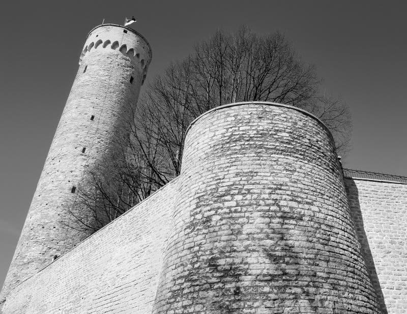 Download Hermann. stock photo. Image of landmark, antique, baltic - 19742548