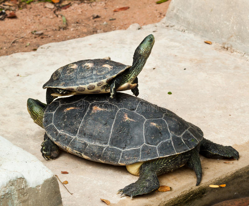 Download Hermann's Tortoise Stock Photos - Image: 23053953
