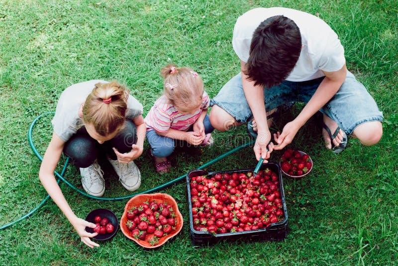 Hermanos que lavan las fresas imágenes de archivo libres de regalías