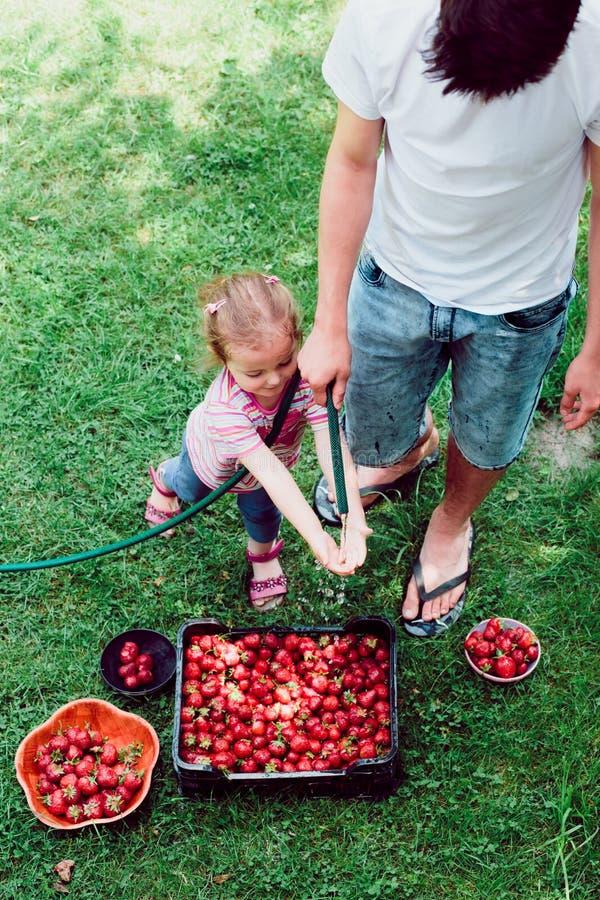 Hermanos que lavan las fresas imagenes de archivo