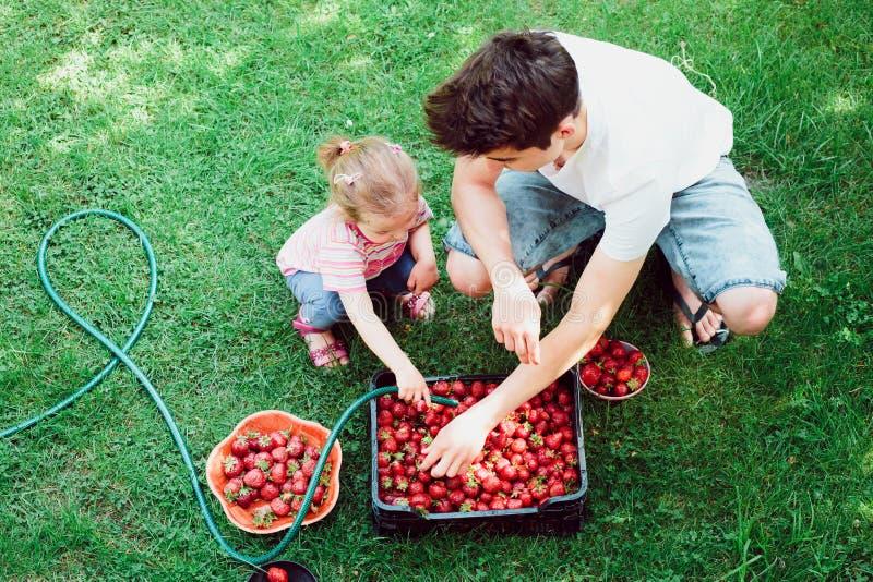 Hermanos que lavan las fresas fotografía de archivo libre de regalías