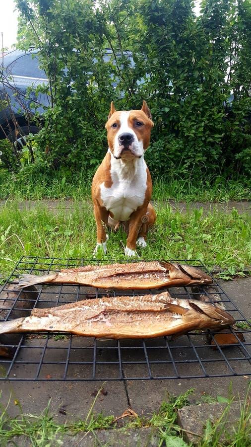 Hermis hund royaltyfria bilder