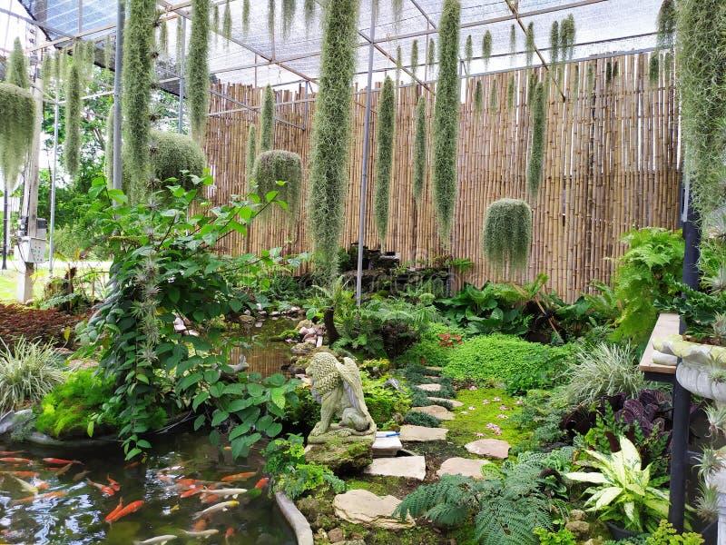 Hermit beard garden big beatiful  bamboo  thailand white green royalty free stock image