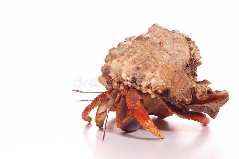 Hermit Crab Royalty Free Stock Photos