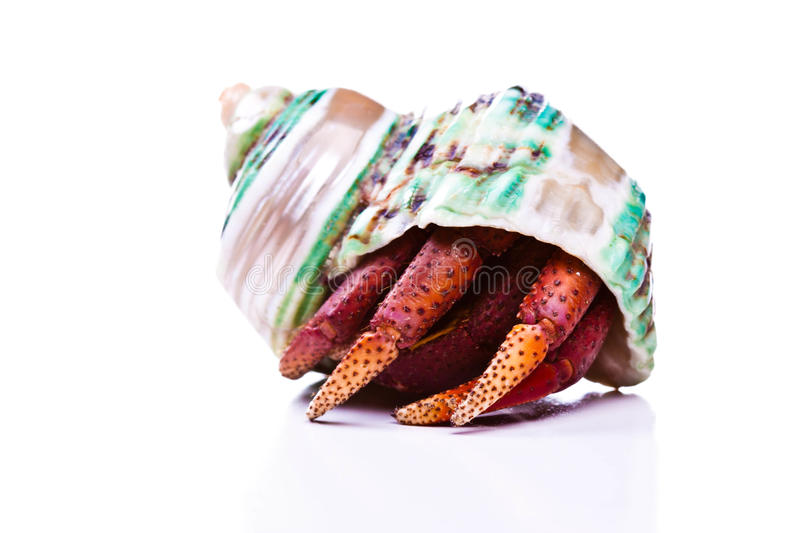 Download Hermit Crab stock image. Image of crab, shell, wildlife - 19642041