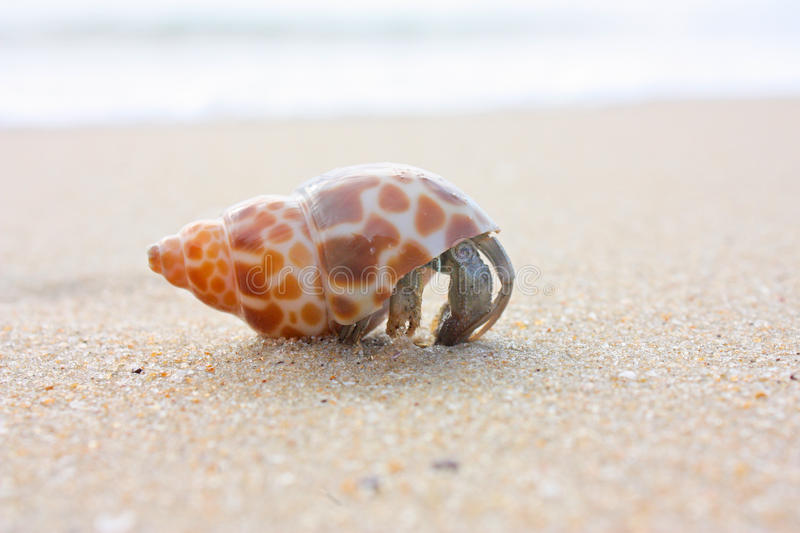 Hermit crab on the beach stock photo. Image of house ...