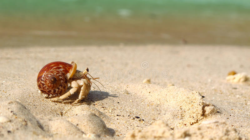 Hermit crab on the beach. stock photos