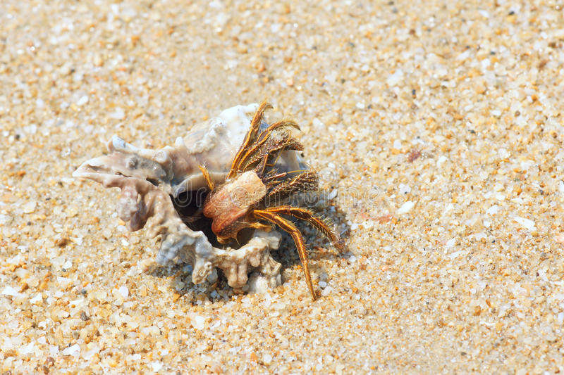 Hermit crab. The close-up of hermit crab with its trumpet shell at sandbeach stock photography