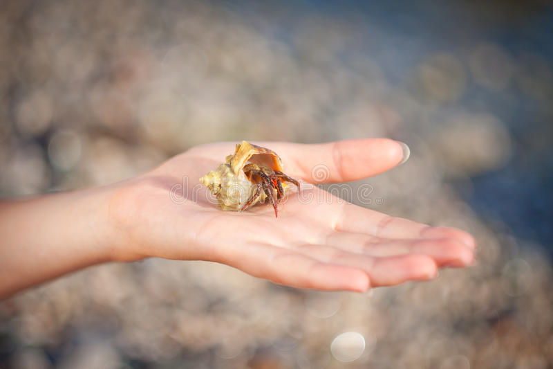 Hermit crab crawling on hand. Nice little Hermit crab crawling on hand stock images