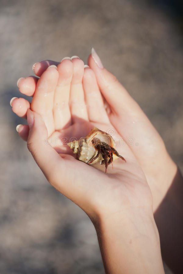 Download Hermit Crab Crawling On Hand Stock Image - Image: 26829271