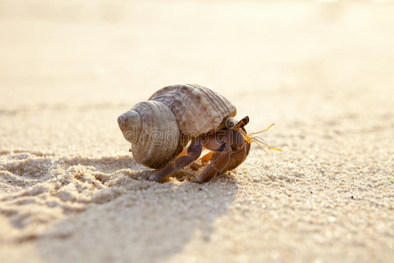 Small hermit crab in the sand of the island Koh Mook, Thailand royalty free stock photos