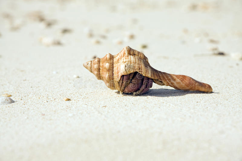 Hermit Crab Hiding On Beach Royalty Free Stock Images
