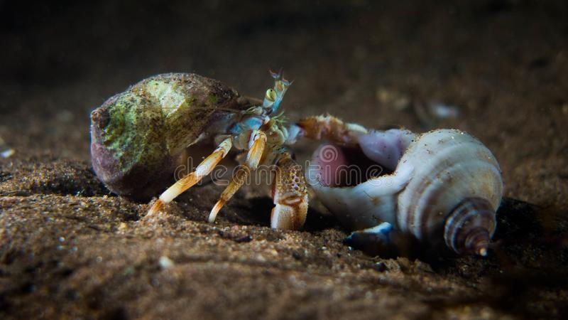 Hermit Crab moving home royalty free stock photos