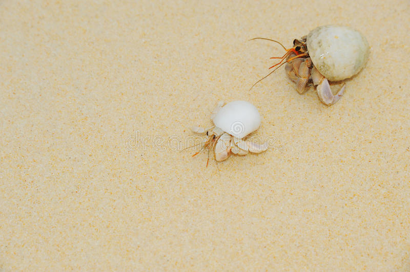 Download Hermit Crab On Sea Sunny Beaches Stock Image - Image: 32254517