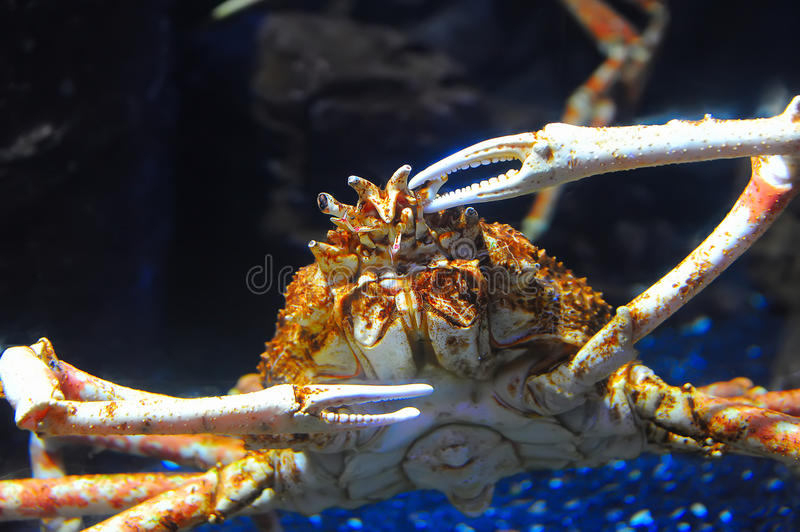 Download Hermit Crab On Sea Sunny Beaches Royalty Free Stock Image - Image: 33141876
