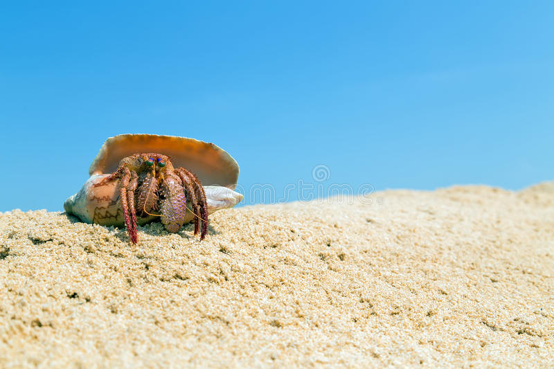 Hermit Crab In The Shell On A Sand Beach Stock Photo ...
