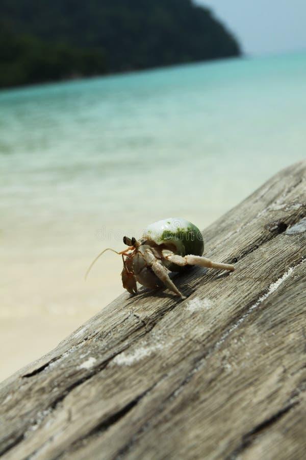 Hermit crab walking stock photos