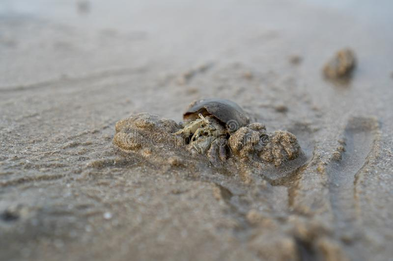 Hermit crabs live on the sand at the sea ,It digging sand to bury themselves to hide from predators. Hermit crabs live on the sand at the sea royalty free stock image