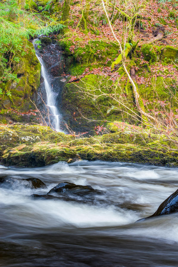 The Hermitage, Dunkeld royalty free stock photos