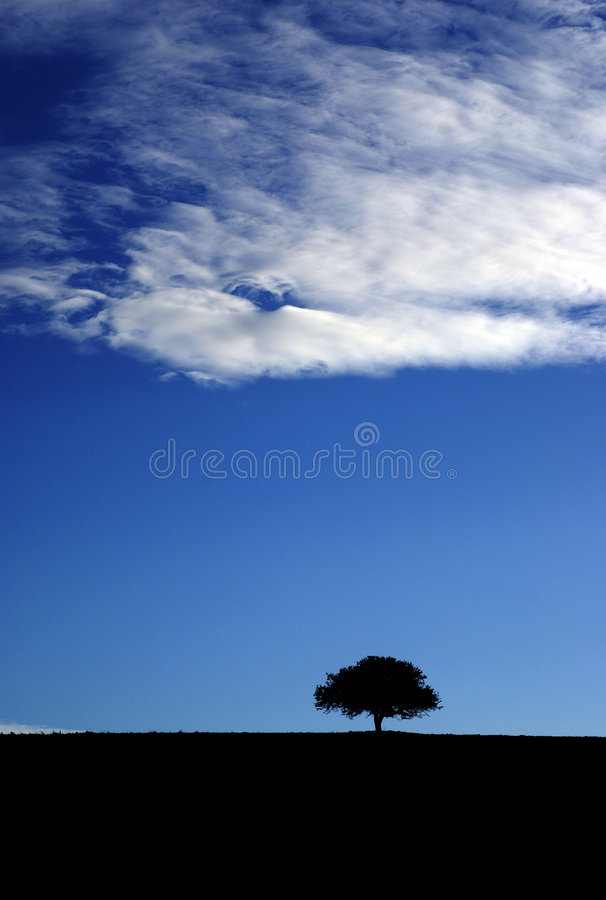 Hermite d'arbre photos libres de droits