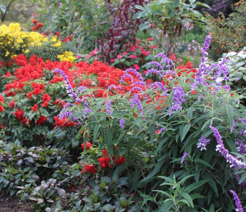Hermosa captura de un colorido jardín de flores imágenes de archivo libres de regalías