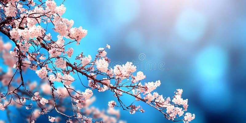 Hermosa escena mágica de primavera con flores sakura imagen de archivo libre de regalías
