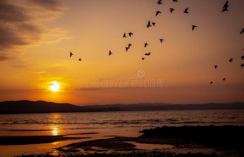 Hermosa puesta de sol en Italia con pájaros fotos de archivo libres de regalías