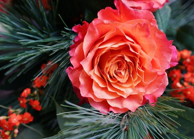 Hermosa rosa roja con pino y flores de invierno fotos de archivo