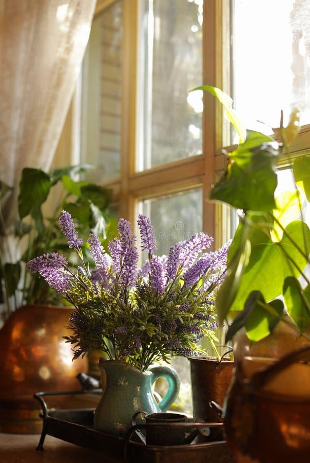 Hermosa vista de houseplants iluminados por el sol en ventana foto de archivo
