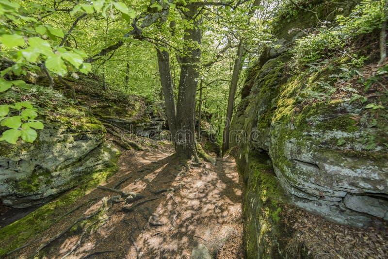 Hermosa vista de la piedra de dos paredes de la roca natural con el musgo con los árboles y la vegetación verde imagen de archivo libre de regalías