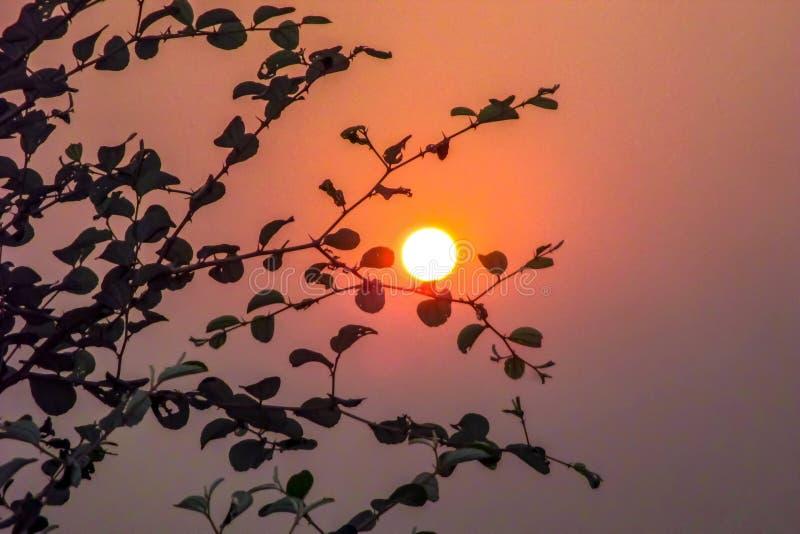 Hermosa vista de la puesta del sol a través de las hojas en el árbol fotos de archivo