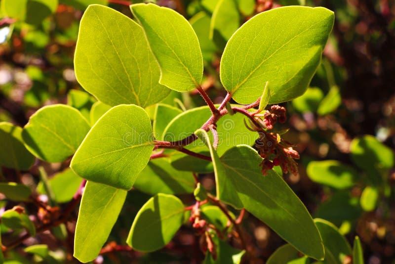 Hermosa vista de las hojas de una pequeña planta en un día soleado imágenes de archivo libres de regalías