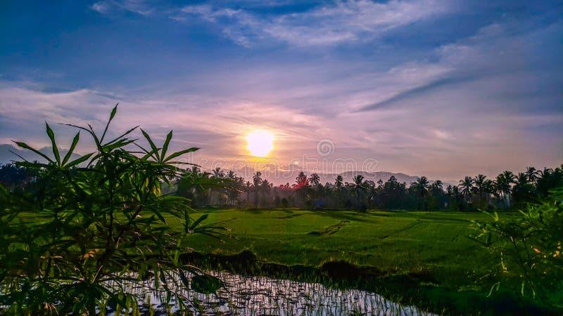 hermosa vista de los campos y de las montañas del arroz imagen de archivo libre de regalías