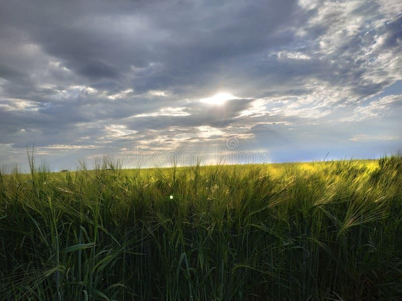 Hermosa vista de plantas La puesta del sol está cerca foto de archivo