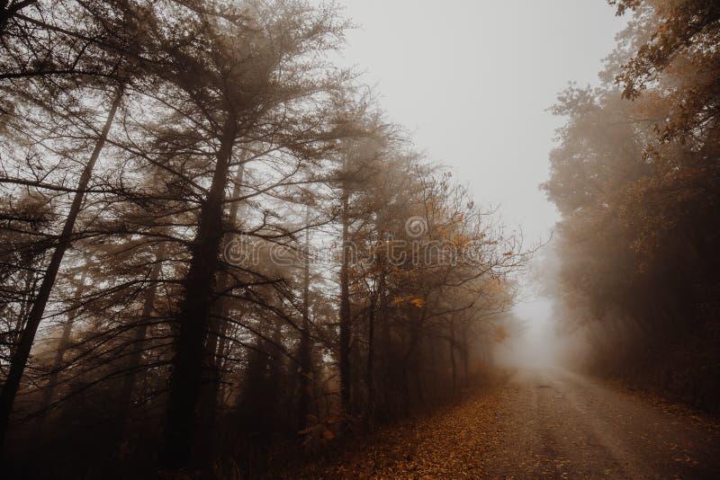 Hermosa vista de un camino en el medio de la niebla, con los árboles en los lados y las hojas en la tierra imagen de archivo