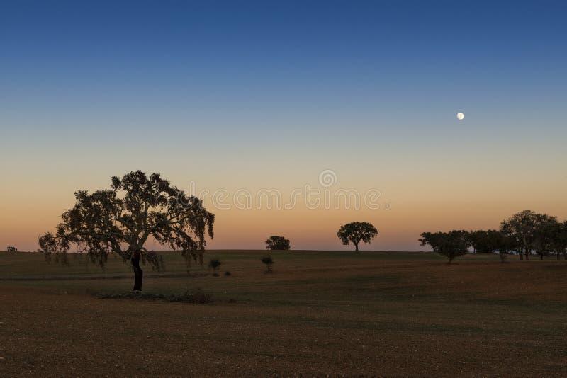 Hermosa vista de un campo con los robles del corcho en la puesta del sol con la luna en el cielo en Alentejo imágenes de archivo libres de regalías