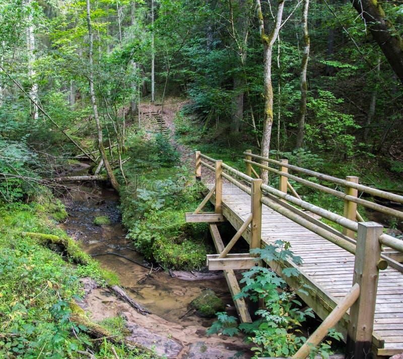 Hermosa vista de un pequeño puente de madera sobre una corriente en el bosque en el parque nacional de Gauja en Letonia imágenes de archivo libres de regalías