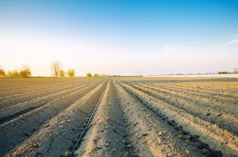 Hermosa vista del campo arado en un d?a soleado Preparaci?n para plantar verduras Agricultura Tierras de labrant?o Selectivo suav imagen de archivo libre de regalías