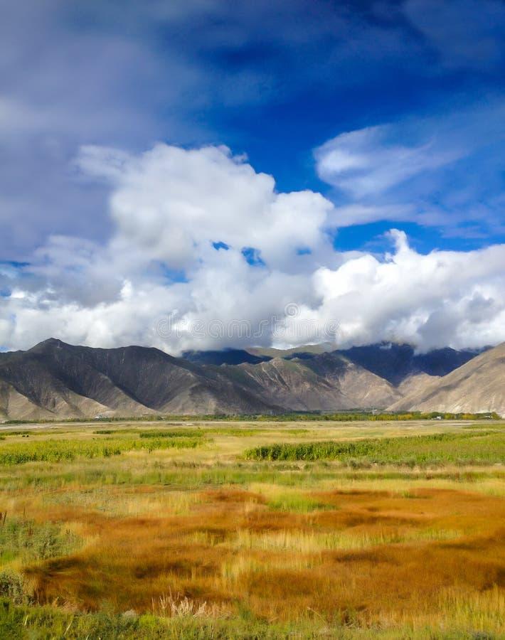 Hermosa vista del campo de hierba natural colorido de prado con las cordilleras asiáticas y el fondo del cielo azul Concepto de l fotos de archivo libres de regalías