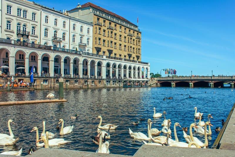 Hermosa vista del centro histórico de Hamburgo con el ayuntamiento y el lago Alster imagen de archivo